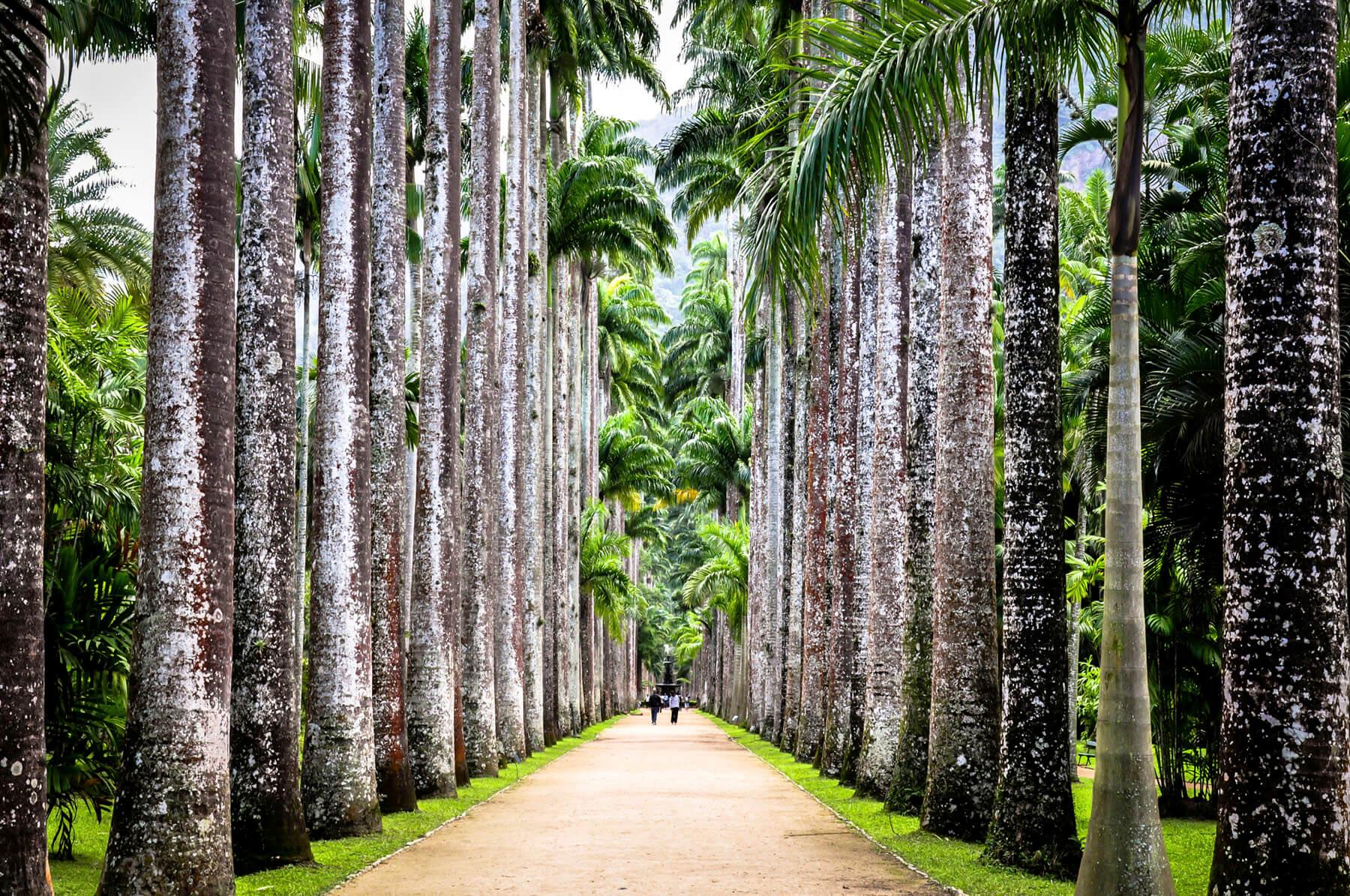 jardin-botanique-centre-rio-de-janeiro